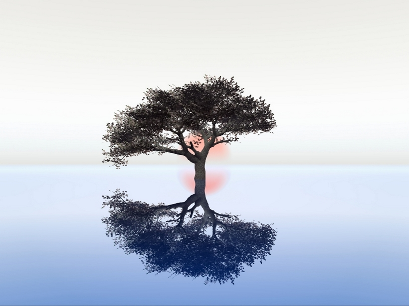 tree4home