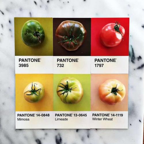 Pantone (12)