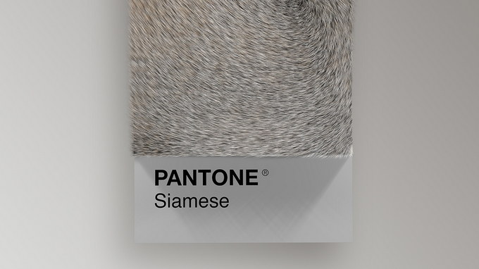 Un nuancier Pantone à base de fourrure de chat