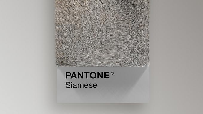 Un nuancier Pantone à base de fourrure de chat