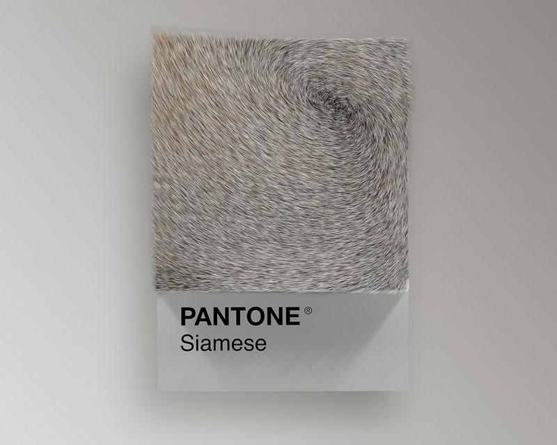Nuancier Pantone (10)