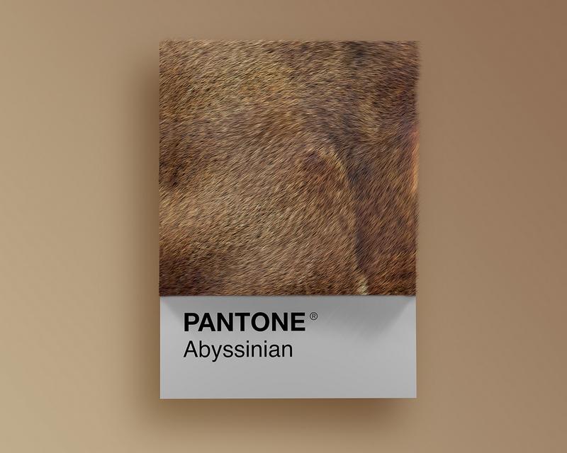 Nuancier Pantone (2)