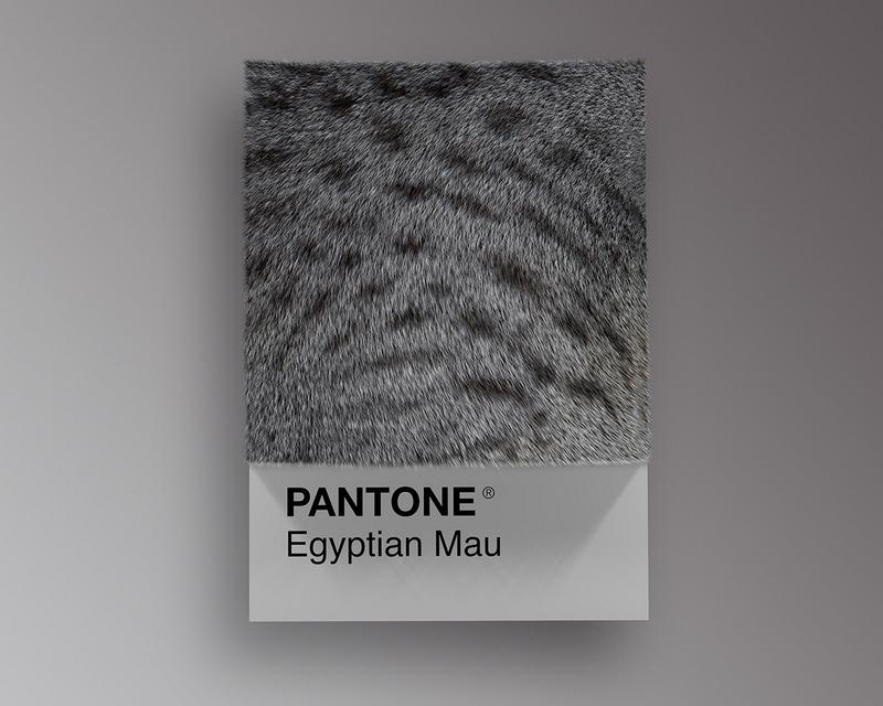 Nuancier Pantone (5)
