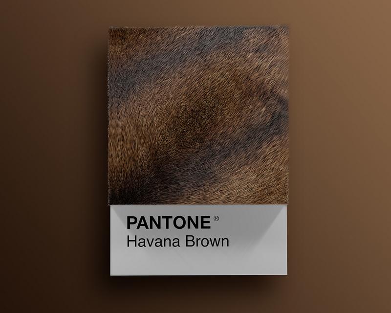 Nuancier Pantone (6)
